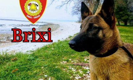 BRIXI potražni pas JVP Umag
