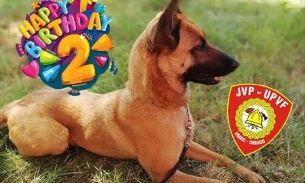 Sretan 2. rođendan Brixi 🐕 🎁 🎂