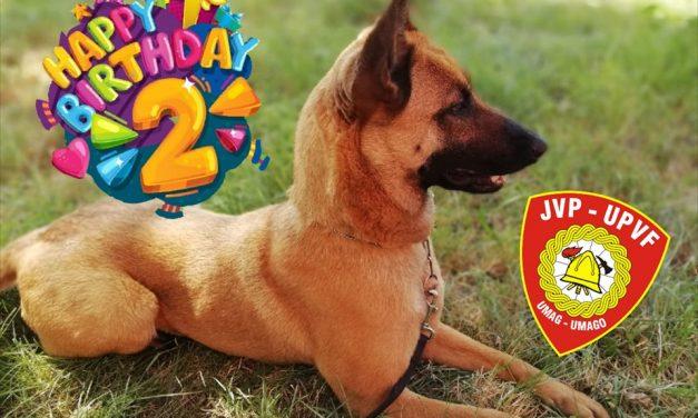 Sretan 2. rođendan Brixi   