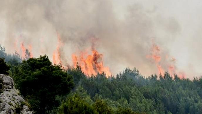 Šumski požari 14.08.2016.g.
